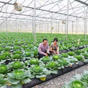 Thận trọng phát triển nông nghiệp hữu cơ